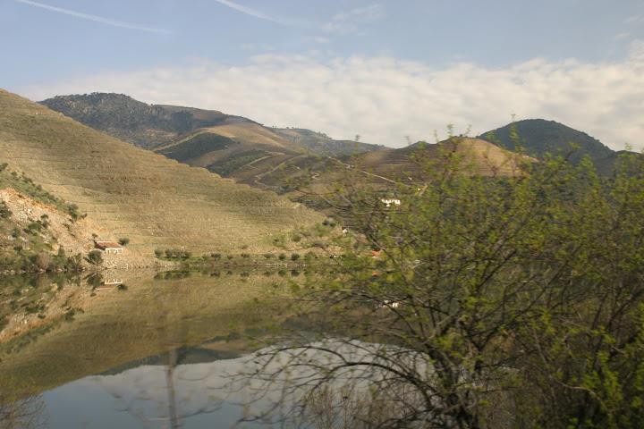 Viñedos Douro