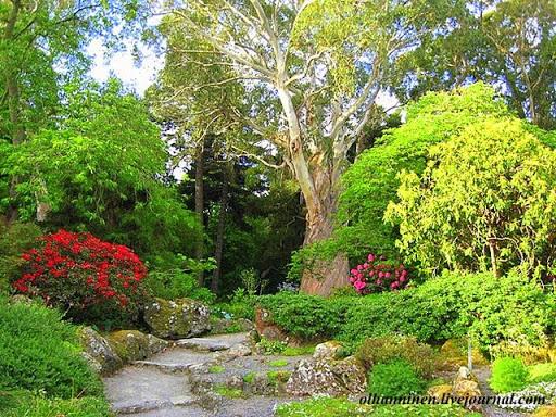 Ландшафт парка весьма разнообразен: лесные заросли сменяются розариями с альпийскими горками