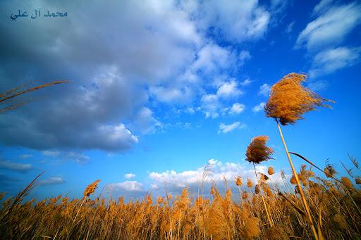 سماء زرقاء بلا نهاية