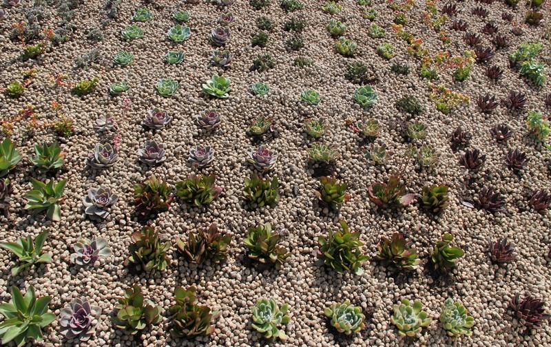 Especies cubierta vegetal Valencia.