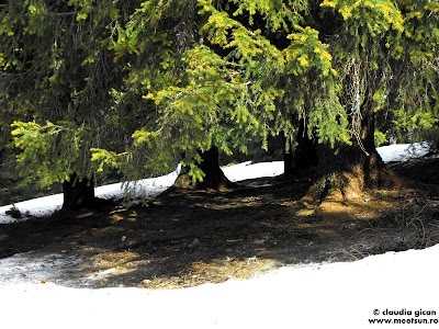 sfarsit de iarna, topirea zapezii