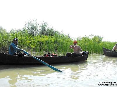 vaslind pe apa tulburi - pestele lovit cu vasla aterizeaza in barca