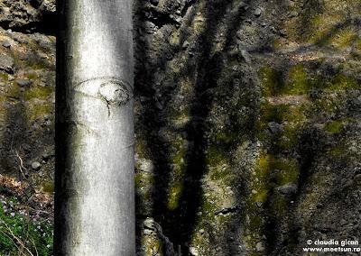 ochiul magic al padurii - fagul