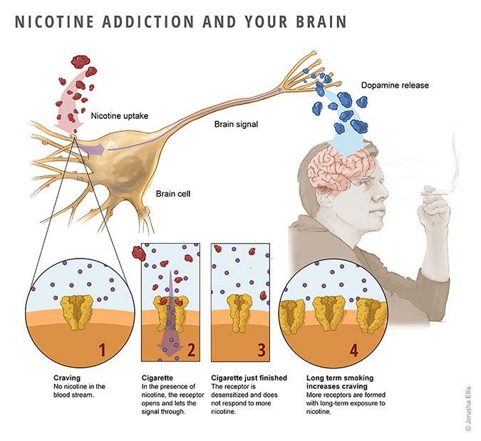 Image result for brain addiction nicotine