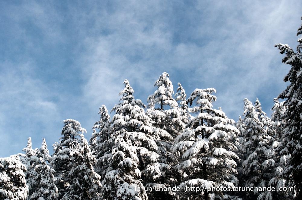 Manali Trees Sky Manali Himachal, Tarun Chandel Photoblog