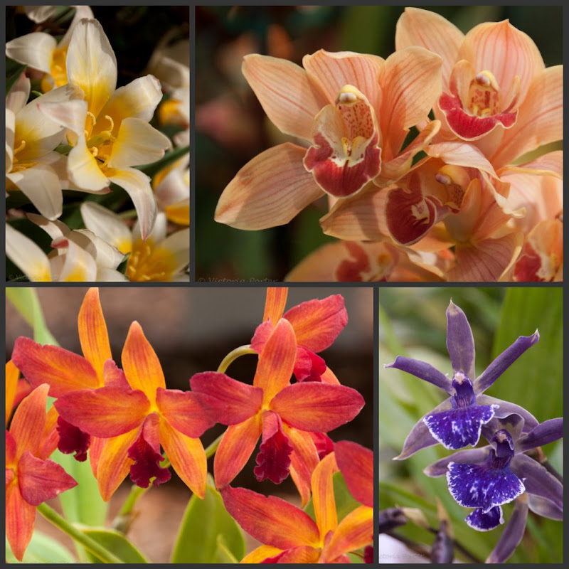 photo collage of orchid images