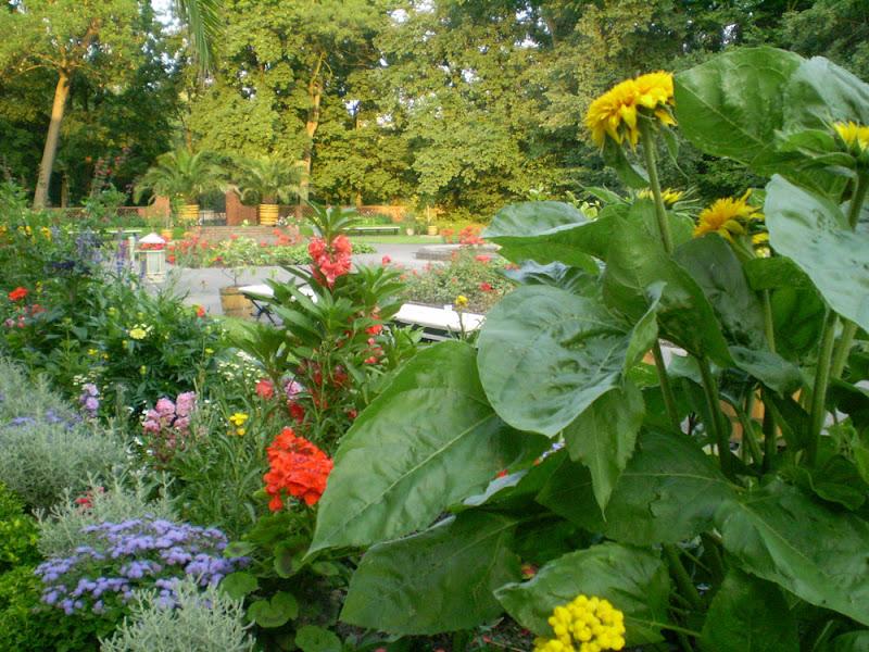 Літній сад