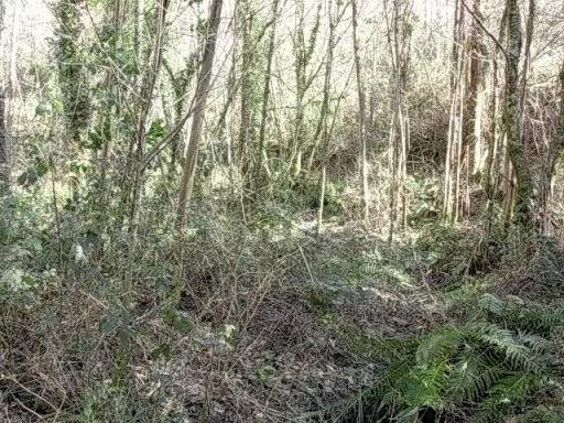 Paseo por el Rio Mandeo R%C3%ADo-Mandeo-9-el-bosque