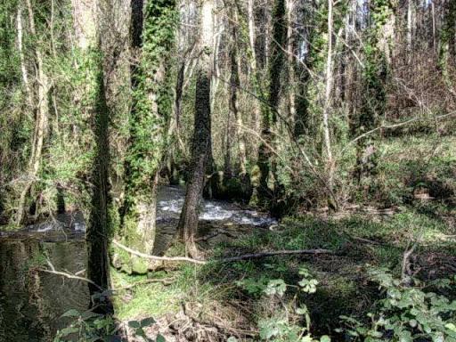 Paseo por el Rio Mandeo R%C3%ADo-Mandeo-10-bosque-y-agua