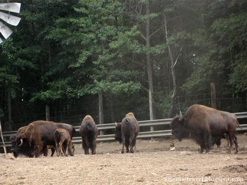 Yellow River Game Ranch: Покормить животных с рук