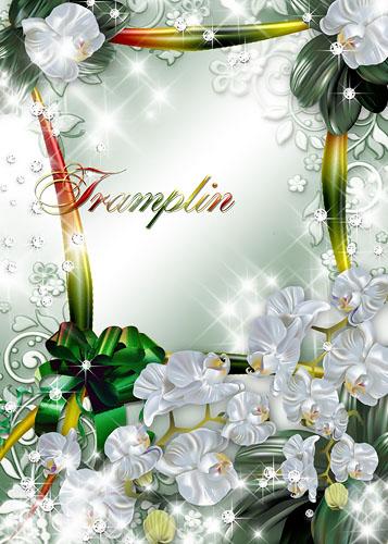 Цветочная рамка – Расцвели в оранжерее, так чудесно орхидеи