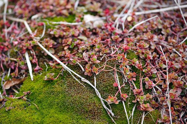 маленькие цветы наноцветы