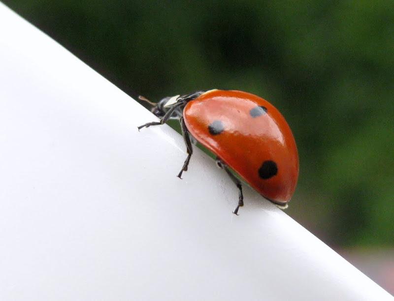 Slike insekata- buba IMG_9329