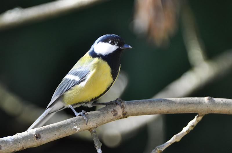 quelque oiseaux du jardin DSC_0622