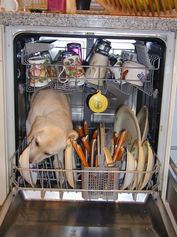 White Trash Dish Washer
