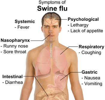 What is Swine Flu?