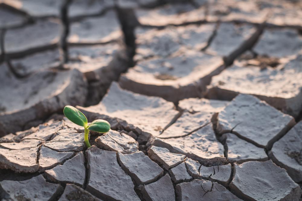 Com forte seca em 2021, pequenos agricultores lidam com redução na renda familiar. (Fonte: Shutterstock)