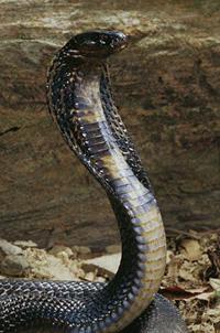 snake_7