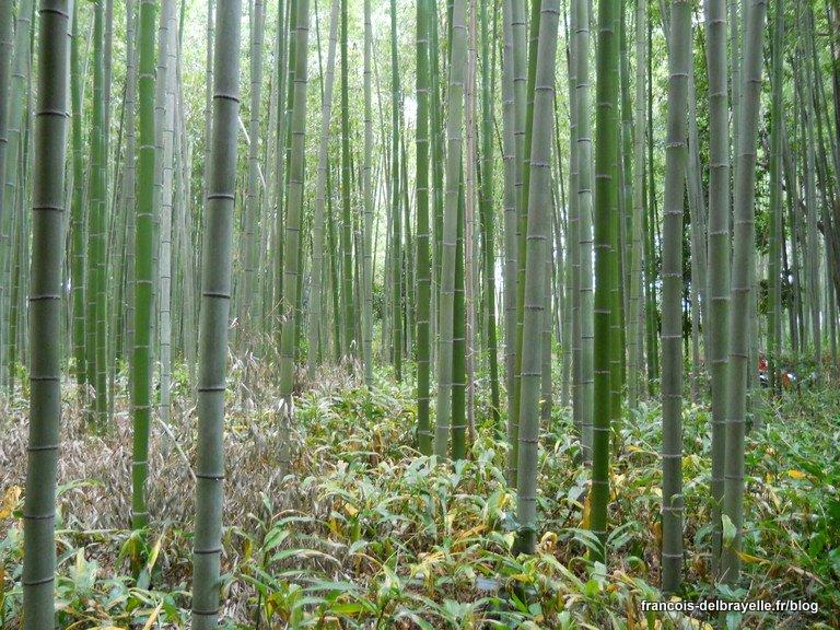 Bambouseraie de Arashiyama