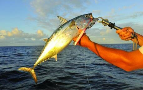 G:\Nova pasta (2)\Peixes\-Bonito\Pesca-esportiva-do-peixe-bonito-min.jpg