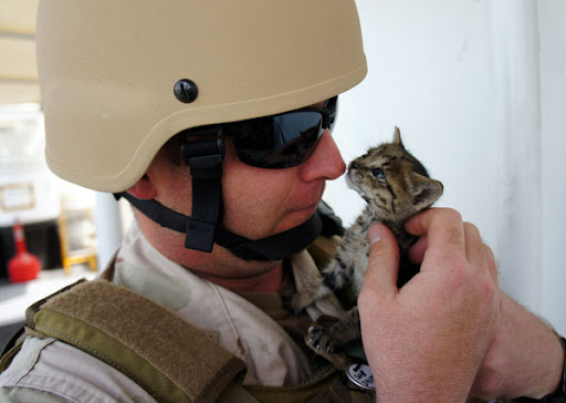 cute rescue tabby kitten gives sailor a kiss
