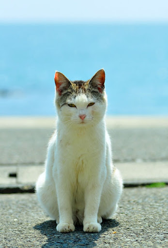 cute cat by the ocean after japan earthquake tsunami tashirojima island