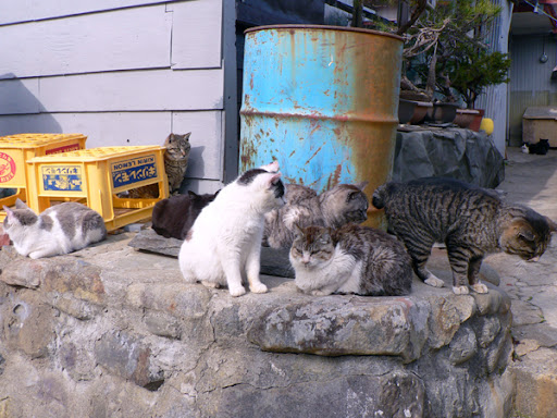 cute tabby cat stand up cat island after earthquake tashirojima