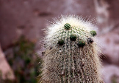 Cactus in the Atacama Desert on a hiking trip in Chile