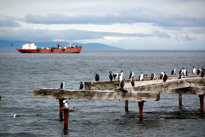 Birds in the Straight of Magellan in Patagonia Chile