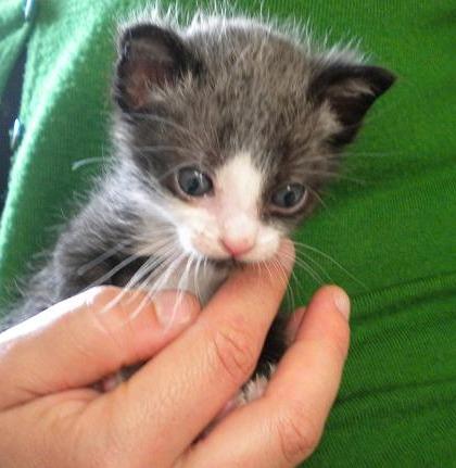 PEPh Y MOUh,dos bonitos bebes  de menos de 1 mes,¡Adoptados! DSCN4880