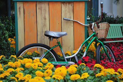 This is an image of a vintage Schwinn bicycle resting against a ticket booth in a flower bed inside the Bellagio Hotel and Casino Conservatory of Flowers, as part of an artistic display.