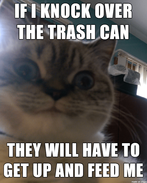 cat logic basics meme