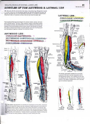 Anatomy Coloring Book Pages - Training Your Body