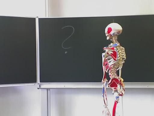 https://lh6.googleusercontent.com/_Ur8W_-li2FQ/TWlhfrxybJI/AAAAAAAAZWY/sM4CBF9AfJE/Schule-Skelett-18-07-09_0908.jpg