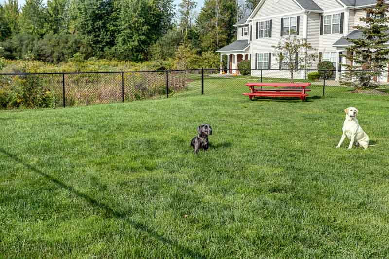 Dog park at Autumn Creek Apartments in East Amherst, NY