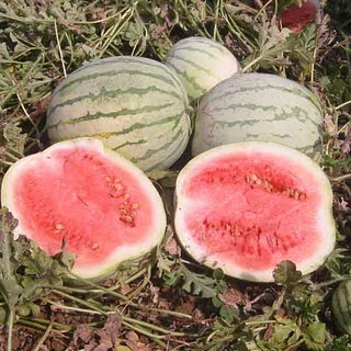 History of Watermelon