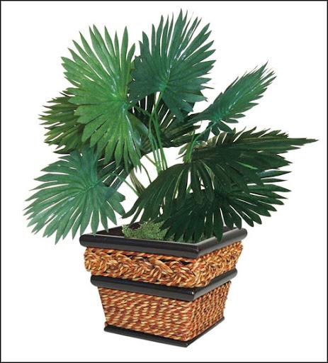 tropical live fan palm home office