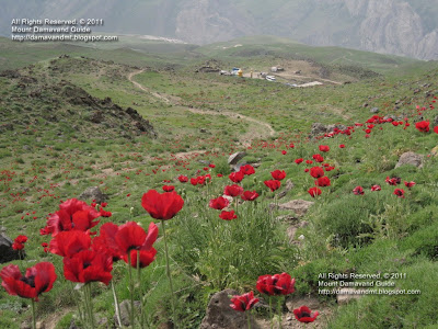 Wallpaper Damavand Iran