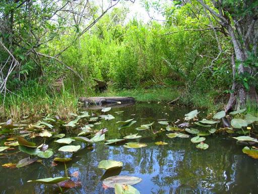Gator Park Everglades