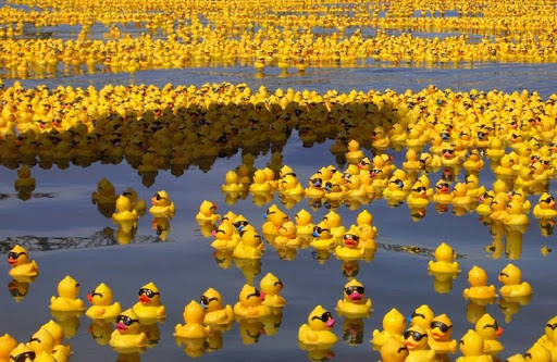 Rubber Duckies.jpg