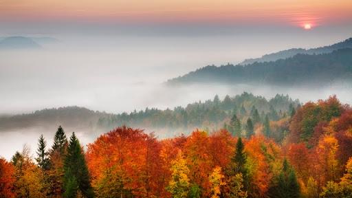 Morning Mist, Ljubljana Basin, Gorenjska, Slovenia.jpg