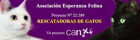 Proyecto CAN Nº 22.289: Rescatadoras de gatos
