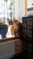 Mercan och Prisse gillar fönsterutsikt