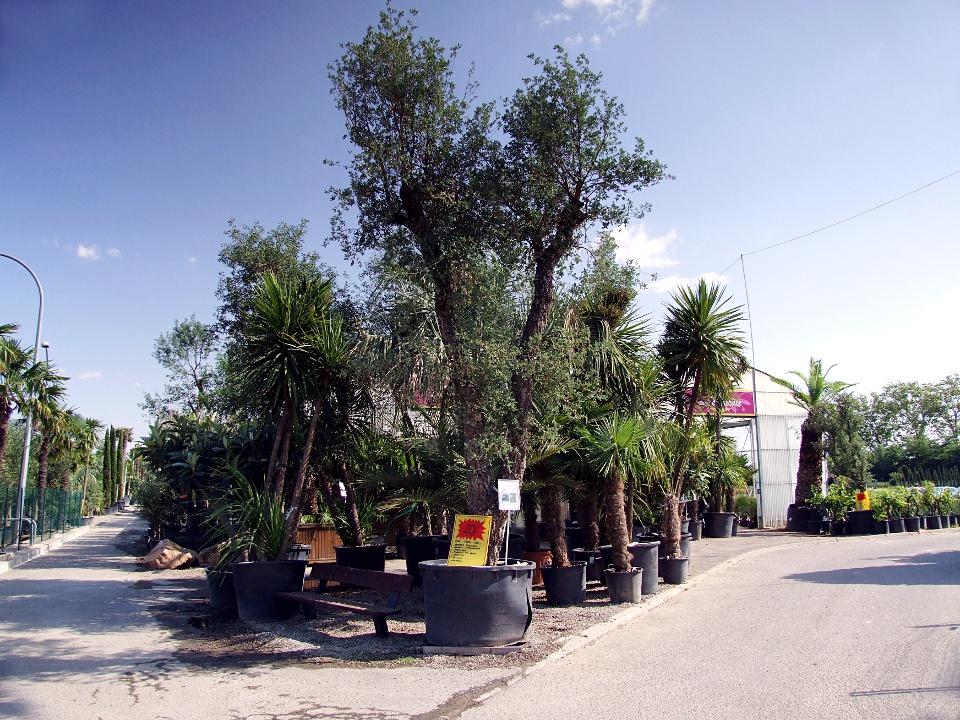 Centra ogrodnicze w Tuluzie