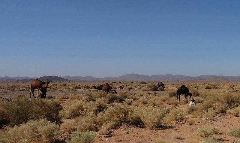 Passeando por Marrocos... - Página 3 DSC07598a