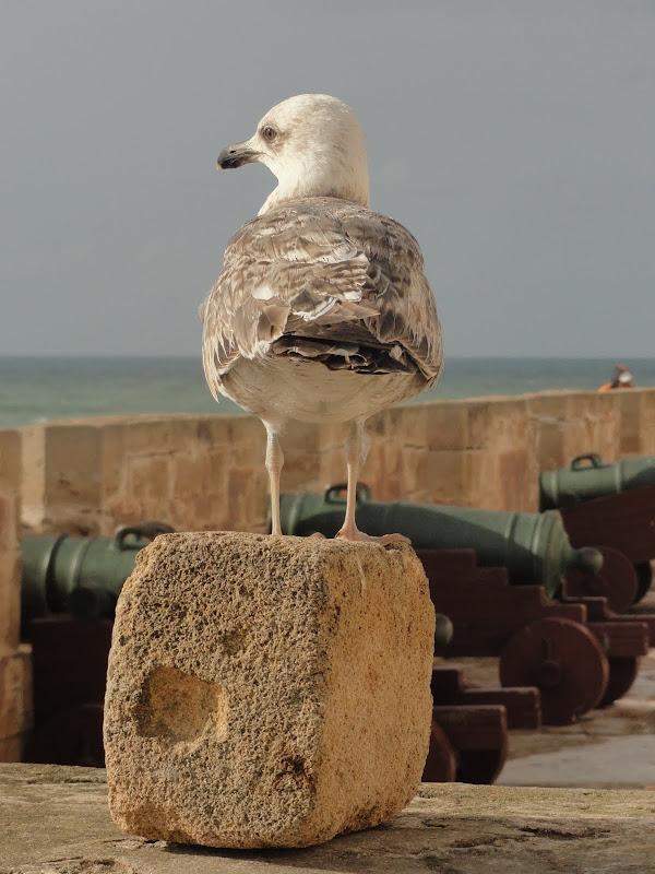 Passeando por Marrocos... - Página 5 DSC08683