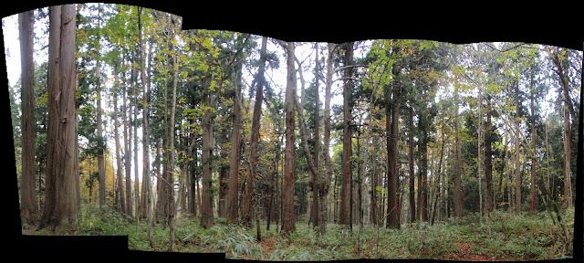 森のパノラマ