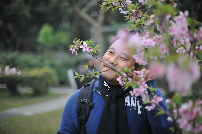 Dr.Sun的山櫻花