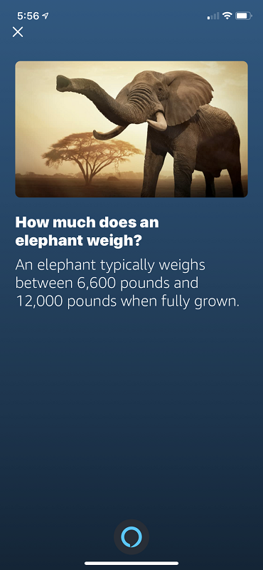 Elephant Weight Screenshot