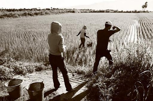 農忙日三部曲